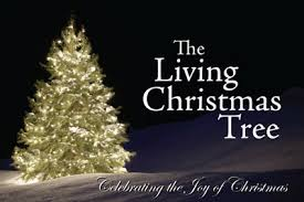 live christmas trees for sale the living christmas tree 2016 in montgomery alabama