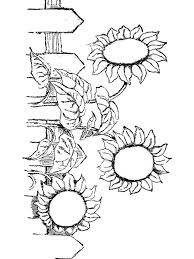 sunflower garden coloring pages coloringstar