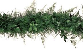 greenery garland fresh plumosa and ruscus greenery garland
