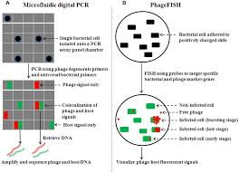 frontiers emerging methods to study bacteriophage infection at