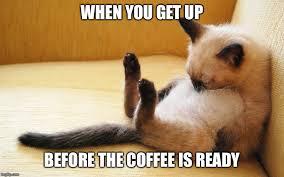 Sleepy Cat Meme - image tagged in sleepy cat imgflip