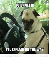 No Time To Explain Meme - 50 funny pug memes best funny pug pictures