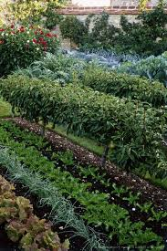backyard vegetable garden layout garden ideas raised bed vegetable garden design how to plant a