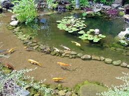 43 best bassin u0026 étang images on pinterest fish ponds backyard