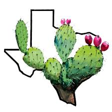 buy cactus for 55 at http www