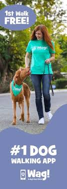 Wag The dog walking app Book dog walkers & track the walks LIVE