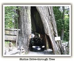 Chandelier Drive Through Tree Chandelier Drive Thru Tree Park