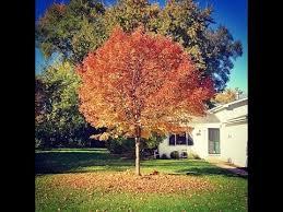 tree changing seasons