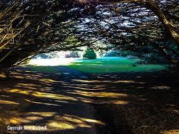 Fort Bragg Botanical Garden Mendocino Coast Botanical Gardens Much More Than Just Flowers