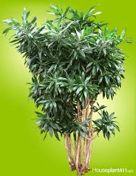 Easy Care Indoor Plants 68 Best How To Identify A Houseplant Images On Pinterest