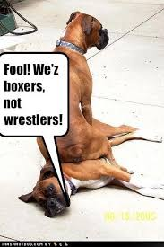 boxer dog sayings 100 best boxer u003c3 images on pinterest boxer love animals and