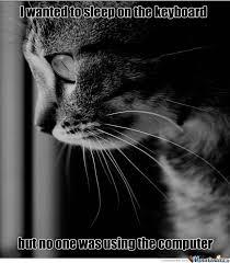 Memes First World Problems - first world problems cat by mardin meme center