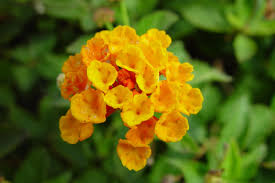 free picture small orange flowers