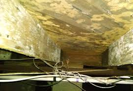 mold in basement what to do with 100 more ideas