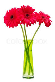 Red Flowers In A Vase Three Red Gerber Flowers Gerbera Daisies In Green Vase Isolated