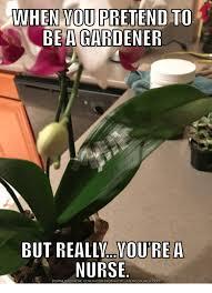 Nurse Meme Generator - wo bea gardener etend to but reallv ou rea nurse download meme