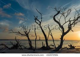 beautiful lighthouse trees stock photo 452072584