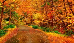 forest fall colors road golden autumn leaves trees red woods