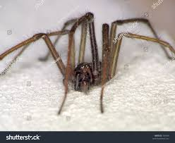 eyelevel closeup house spider stock photo 784596 shutterstock