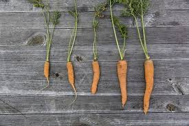 A List Of Root Vegetables - companion planting gardening channel