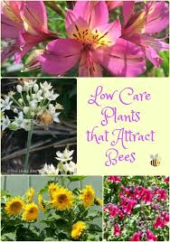 best 25 flower plants ideas on rustic landscaping