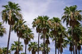 palm trees thewallgalleryblog