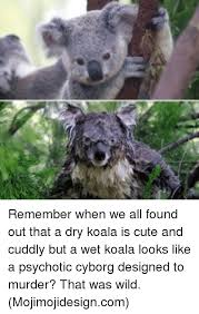 Koala Meme Generator - 25 best memes about memes memes meme generator