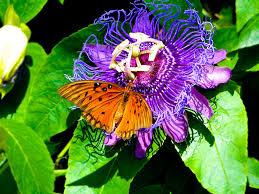 native houston plants planting for pollinators houston arboretum u0026 nature center