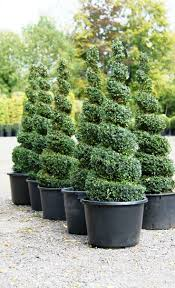Artificial Trees Home Decor Best 25 Topiary Trees Ideas On Pinterest Topiaries Topiary