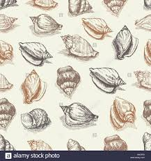 vector seamless pattern sketch of seashells isolated on white