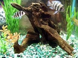 how to prepare and choose wood for an aquarium