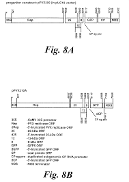 Google Maps Ralph Mueller by Patent Us6531647 Gene Silencing Methods Google Patents