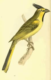 74 best william swainson images on pinterest literature animals