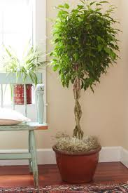 201 best indoor plants images on pinterest houseplants indoor