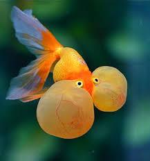 ornamental fish varieties rainbow fish varieties 2017 fish