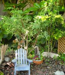 Small Water Gardens In Containers How To Plant A Miniature Garden In A Big Pot Part Ii The Mini