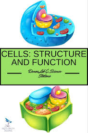 144 best sci 8 cells u0026 systems images on pinterest life science