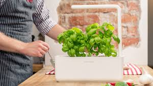 Grow Herbs Indoors by Seeds To Herbs Indoors Guaranteed Youtube