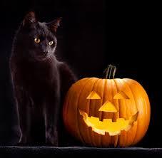 calabazas de halloween trick or treat u2013 halloween can be scary u2013 nova cat clinic