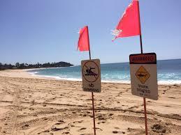 Flags In Hawaii Shark Attacks Boy In Hawaii Time