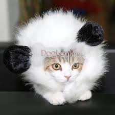 White Dog Halloween Costume Hat Promotional Picture Detailed Picture White Dog