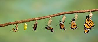do butterflies need stress management