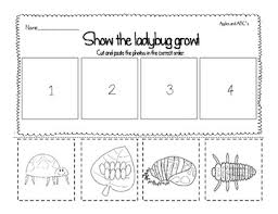 life cycle of a ladybug freebie by michelle griffo from apples
