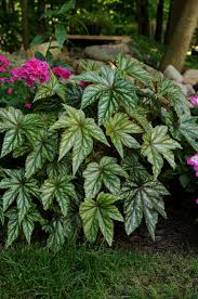 all the dirt on gardening heat tolerant plants for the 2013
