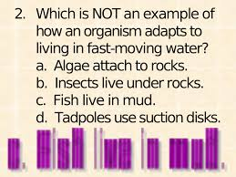 chapter 4 test review chapter 4 study guide 1 many plants can