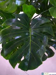 free shipping 13 leaves pcs turtle leaves plants artificial tree