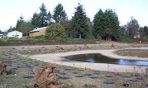 Wetland Resources Of Washington State by Wetlands Sound Native Plants