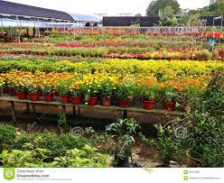 plant nursery stock photo image 66413331