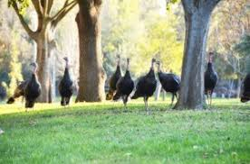 top 10 geeky turkey facts for conversation at thanksgiving dinner