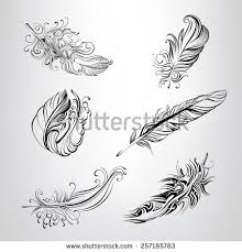 set feathers ornament stock vector 257185783